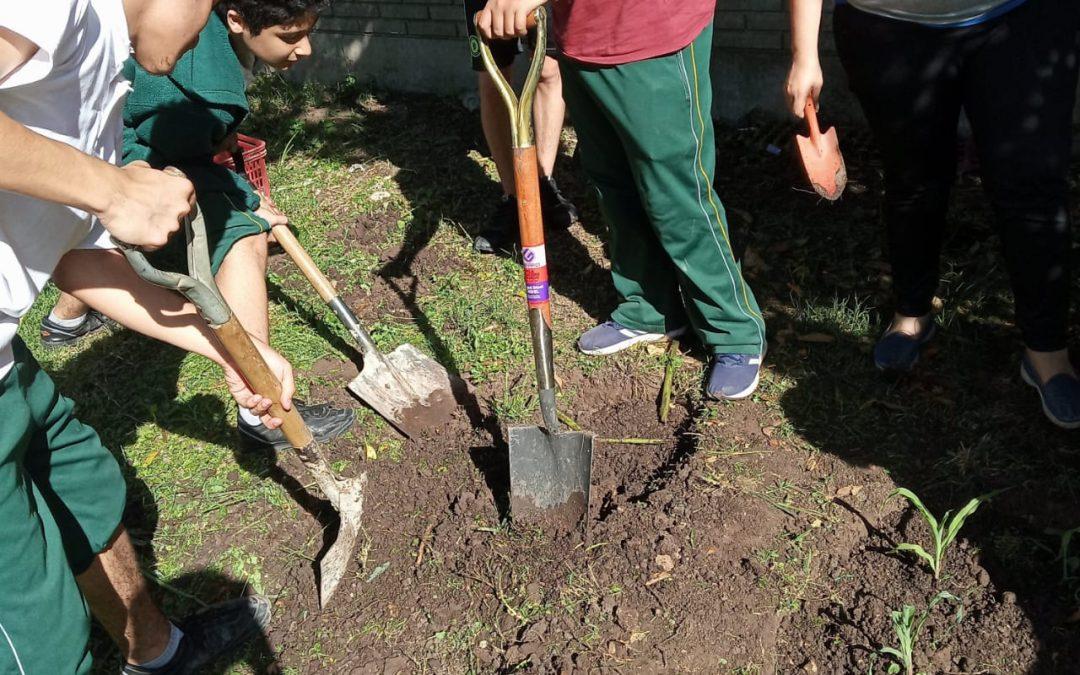 Proyecto Huerta en Acción